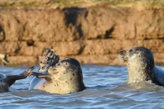 Common Seals © Russel Miles