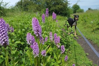 Picture of dog and orchids