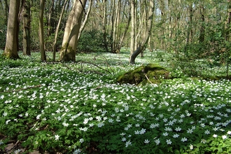 East Blean Wood NNR