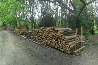 Woodstacks at Gill
