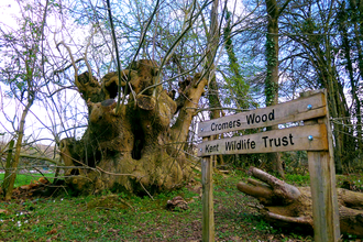 Cromers Wood Welcome