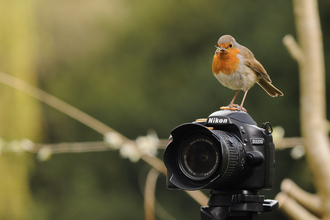 Robin on a camera, photo by Jose Perafan