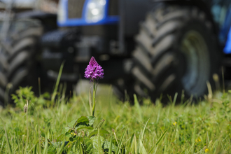 Pyramidal orchid on brownfield site for construction, photo by Terry Whittaker/2020VISION