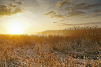 Sunrise over the marshes, photo by Phil Haynes