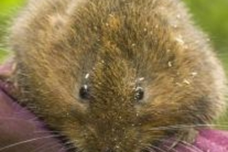 Vole prior to its release by Gareth Christian