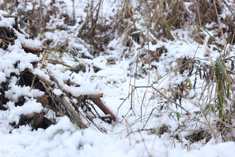 Snowy undergrowth