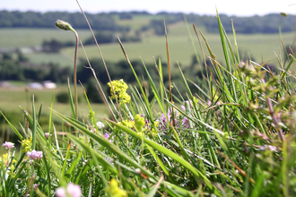 Photo of chalk grassland by D. Attwood