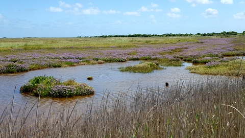 Wetland at Sandwich and Pegwell Bay, photo by Vicky Aitkenhead