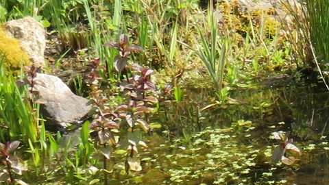Building and maintaining a garden wildlife pond (Online ...