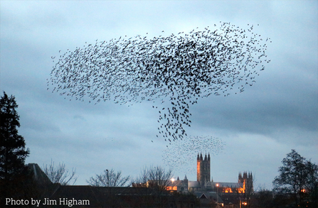 Jim Higham's photograph of a starling murmuration over Canterbury