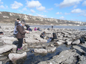 Transect Survey - Copt Point, Folkestone, Kent