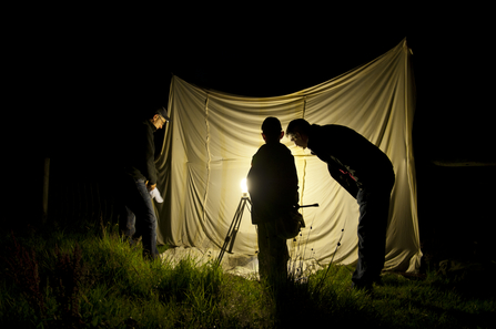 Moth trapping (c) Ross Hoddinott/2020VISION