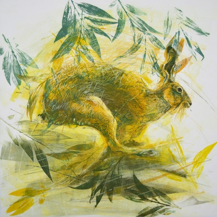 Elaine Thompson Hare in the Willows II
