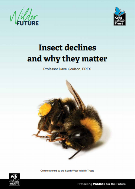 Action For Insect - Report