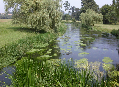 Great Stour Local Wildlife Site at Godmersham, photo by Joyce Pitt