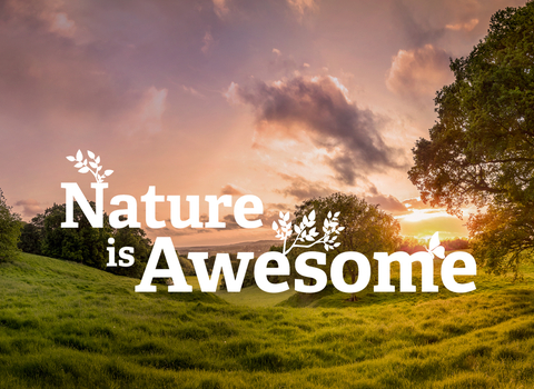 Nature is Awesome
