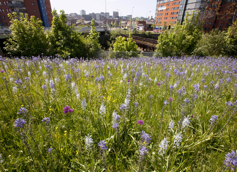 Wild flower planting in urban situation, photo by Paul Hobson